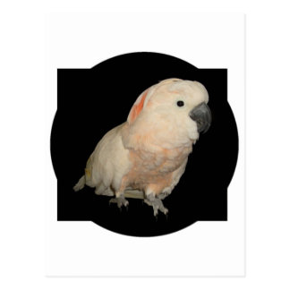 Diseño moluqueño del loro de Cockatoo Tarjeta Postal