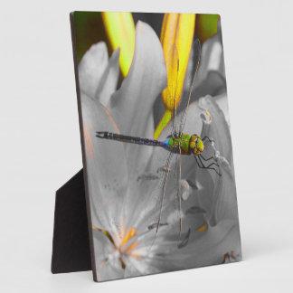 diseño original 8x10 de la libélula del jjhélène placa para mostrar
