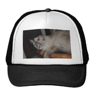 Diseño original de la foto del gatito del gato de gorras