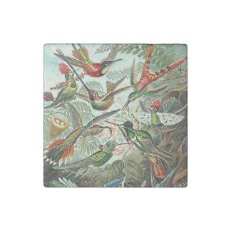 Diseño rojo verde de los pájaros de Haeckel Imán De Piedra