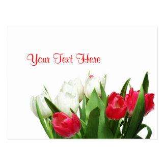 Diseño rojo y blanco exquisito de los tulipanes postal