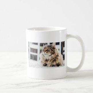 Diseño siberiano del gato persa del tabby mullido taza clásica