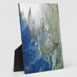 Diseño transparente del arte moderno de la gaviota placas de plastico