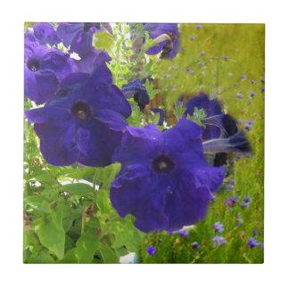 Diseños de color morado oscuro de la petunia azulejo cuadrado pequeño