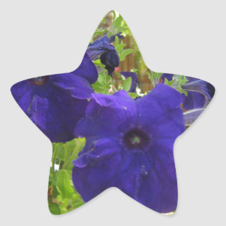 Diseños de color morado oscuro de la petunia pegatina en forma de estrella