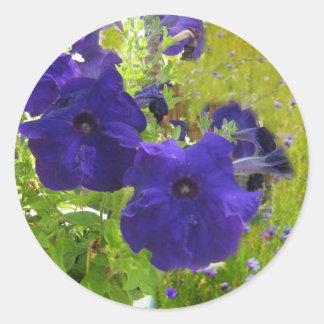 Diseños de color morado oscuro de la petunia pegatina redonda