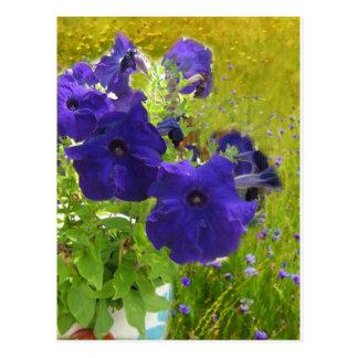 Diseños de color morado oscuro de la petunia tarjeta postal
