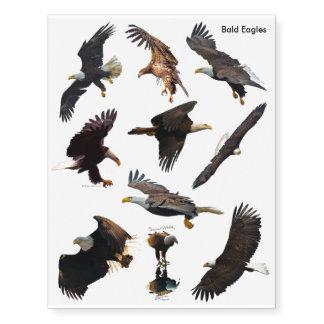Diseños de la fauna de Eagles calvo para los Tatuajes Temporales