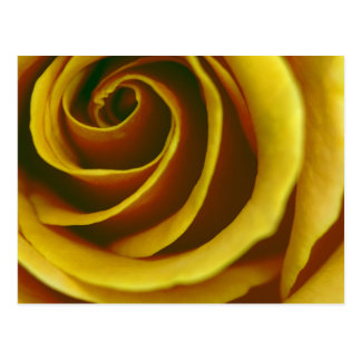 Diseños del rosa amarillo de Jeff Pierson Postales