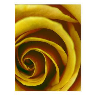 Diseños del rosa amarillo de Jeff Pierson Postal