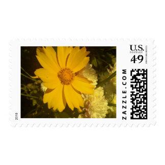 Diseños florales 002 envio