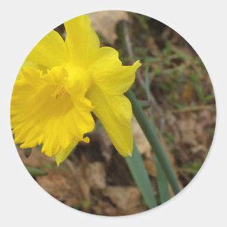 Diseños florales amarillos de Jonquils de la prima Etiqueta
