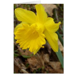 Diseños florales amarillos de Jonquils de la Tarjeta De Felicitación