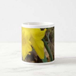 Diseños florales amarillos de Jonquils de la Taza Clásica