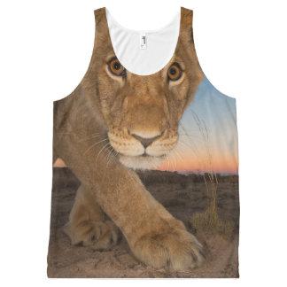 diseños frescos del león
