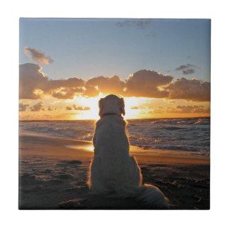 Disfrute de la puesta del sol azulejos