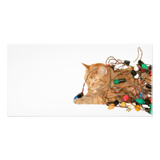 Disgruntled Christmas cat Photo Greeting Card