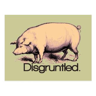 Disgruntled Pig Postcard