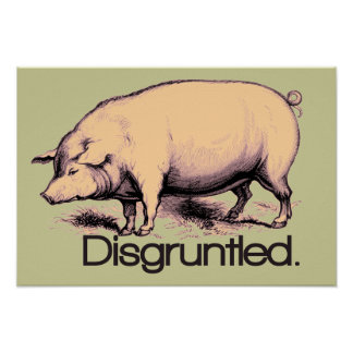 Disgruntled Pig Poster