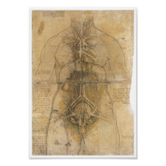 Dissection of the organs of a woman, Da Vinci Posters
