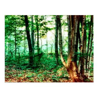 Distant Mist Postcard