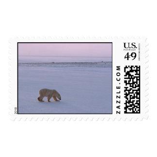 Distant Polar Bear Postage Stamps
