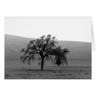 Distant Tree (Black & White) Card