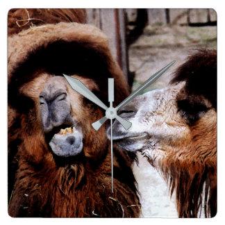 Distensión marital entre el reloj de los camellos