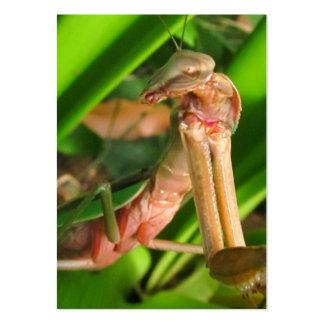 Distracted Mantis b ~ ATC Large Business Card