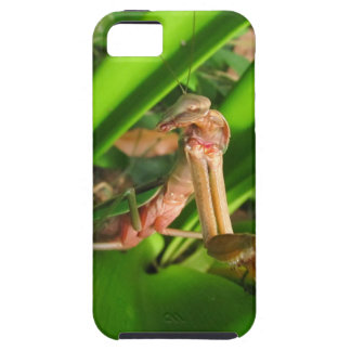 Distracted Mantis ~ iPhone 5 CaseMate Vibe iPhone SE/5/5s Case