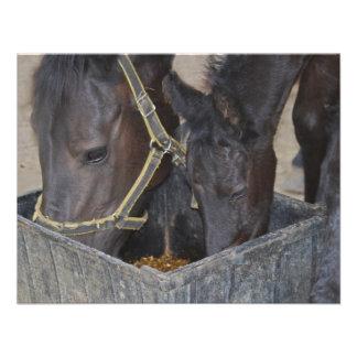 Distribución de los caballos comunicado personal