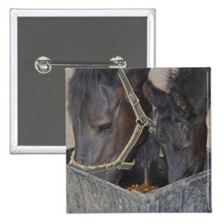 Distribución de los caballos pin cuadrado