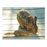 Distribución del conejito y del Chipmunk Postales