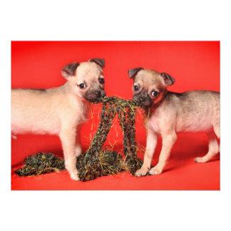 Distribución linda de dos perritos anuncios