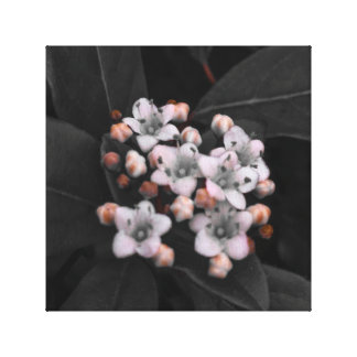 Ditsy Blossom Photographic Print