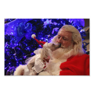 DITZY DOGS~CHINESE CRESTED~CHRISTMAS PHOTO