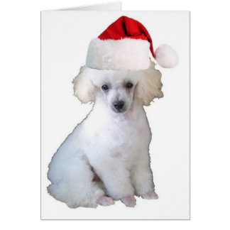 Ditzy Dogs~Original Greetin Card~Poodle Greeting Card