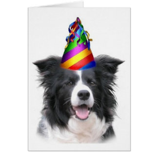 Ditzy Dogs~Original Notecard~Border Collie~B'day Greeting Card