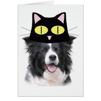 Ditzy Dogs~Original Notecard~Border Collie Card