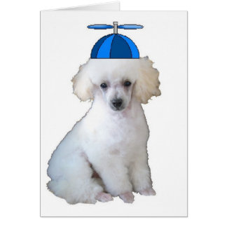 Ditzy Dogs~Original Notecard~Poodle Card