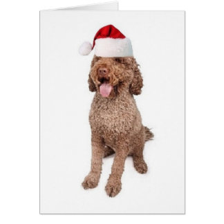 Ditzy Dogs~Original Notecard~Portugese Water Dog Card