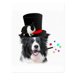 Ditzy Dogs~Original Postcard~Border Collie Postcard