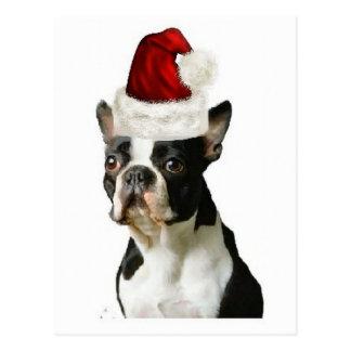 Ditzy Dogs~Original Postcard~Boston Terrier Postcard