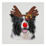 Ditzy Dogs~Original Poster~Border Collie