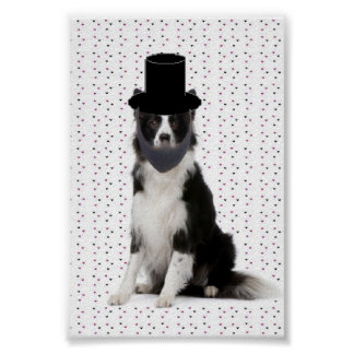 Ditzy Dogs~Original Poster~Border Collie Poster