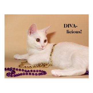 Divalicious Cat Post Card