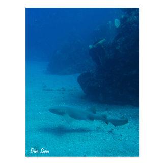 Dive Saba postcard-Nurse shark
