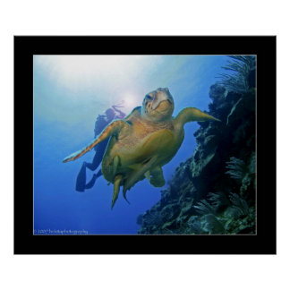 Diver and Turtle in Belize Poster