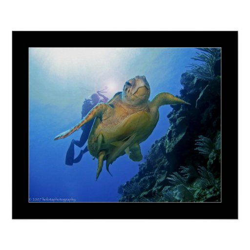 Diver and Turtle in Belize Posters