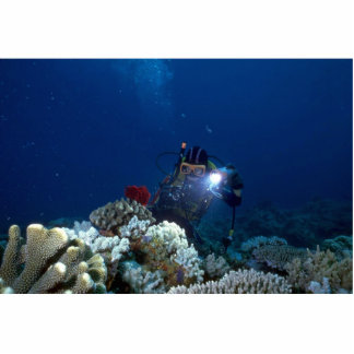 Diver shooting video on coral bed photo cutouts